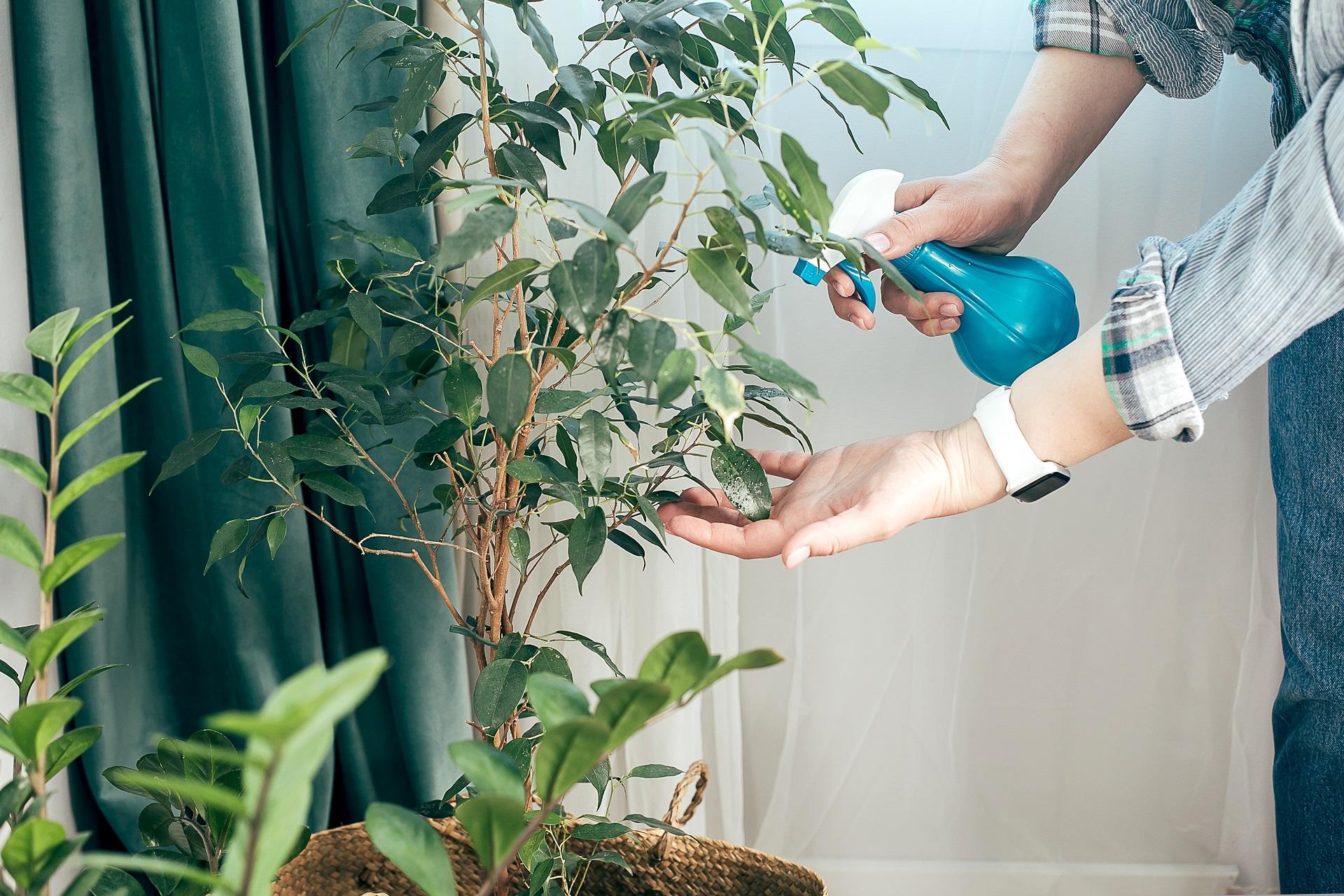 Beim Frühjahrsputz werden auch die Pflanzen abgestaubt und bewässert